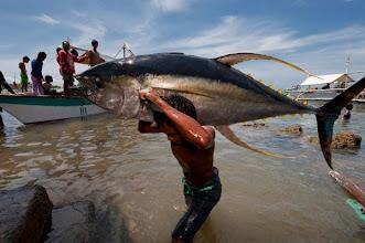 Photo: Large Tuna taken at Puerto Princesa