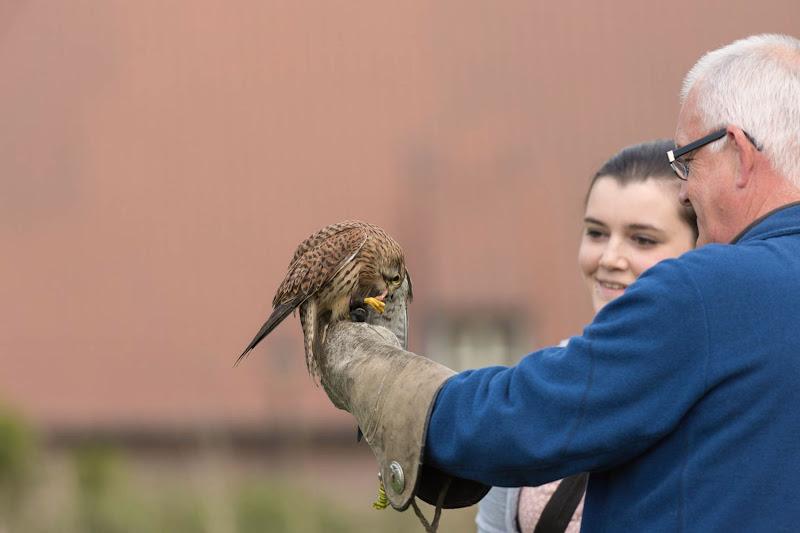 Gempse Roofvogelworkshop 29 04 17 (foto's: Timothy Leysen)