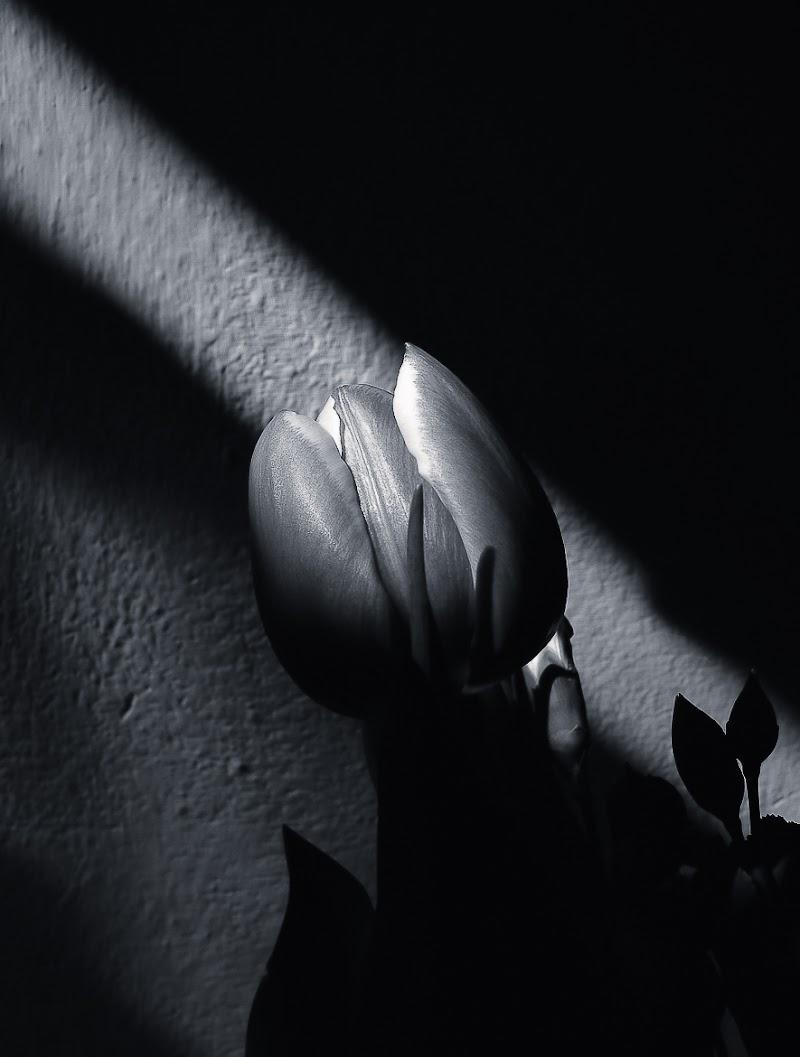 Lama di luce di Erato
