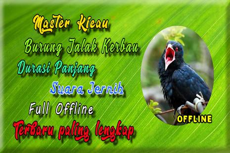 Suara Burung Jalak Kebo Gacor MP3 - náhled