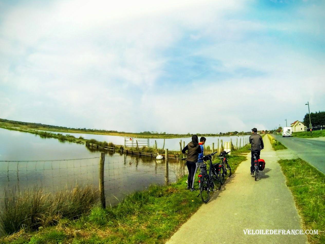 A vélo entre Le Crotoy et le Parc de Marquenterre  - Blog Les Balades à vélo autour de La Baie de Somme par veloiledefrance.com