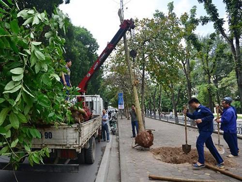 Dịch vụ cung cấp cây đa dạng, chất lượng
