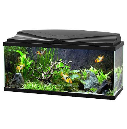 Akvarium Svart Aquarium 80 Ciano