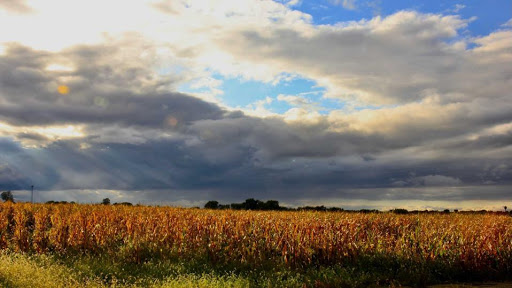 Fintech And Farmland: How Fintech Platforms Are Allowing Retail Investors To Dig Into Land Investments