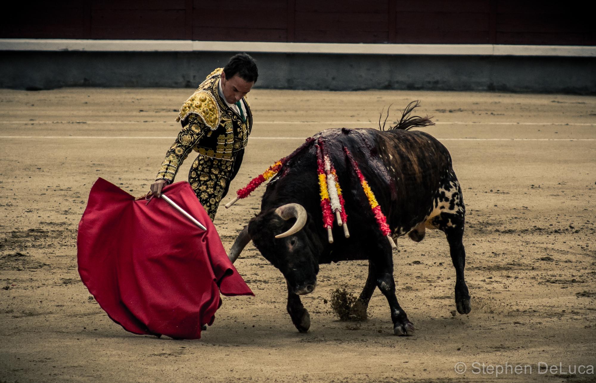 Photo: Bullfight-9