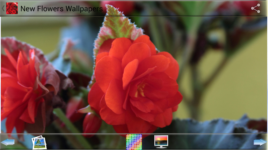 android New Flowers Wallpapers Screenshot 1
