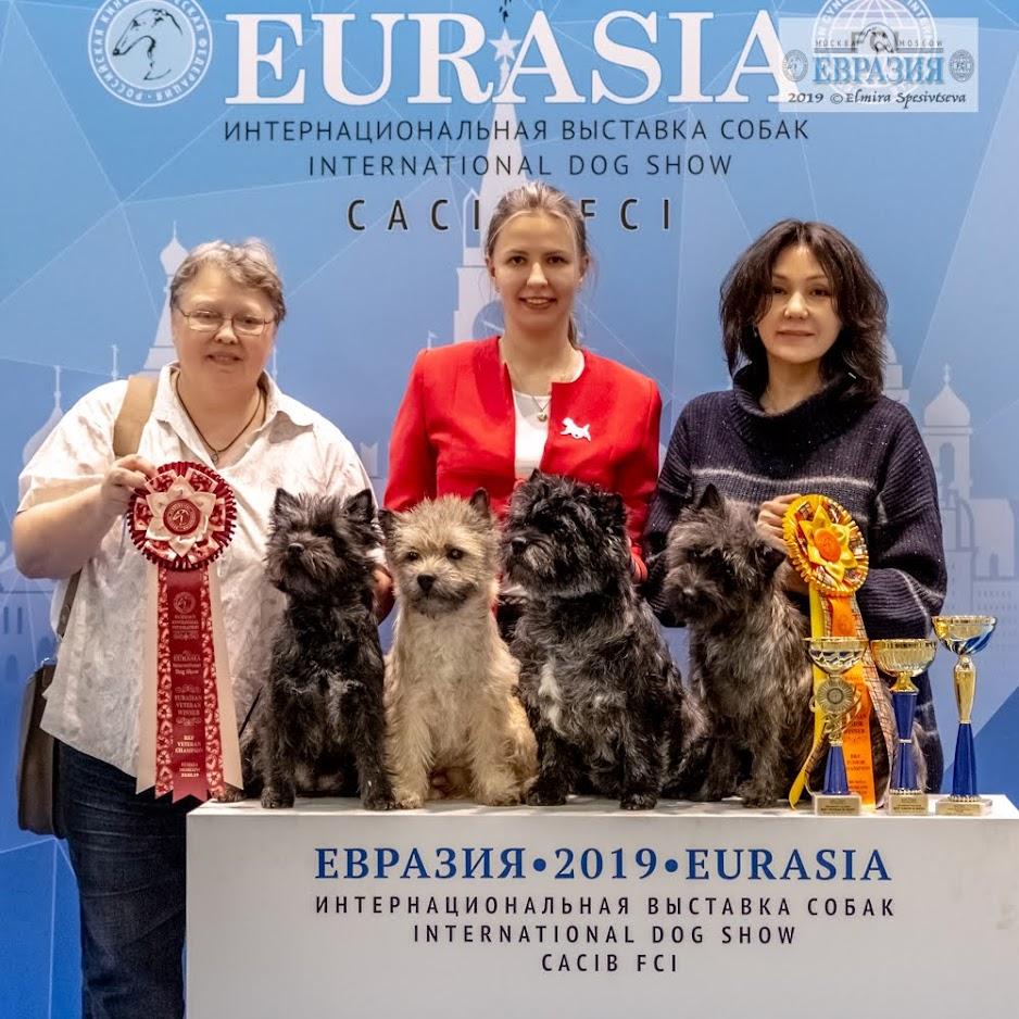 Фото керн терьеров питомника Еливс победителей выставки Евразия 2019 на призовом месте с владельцами и хендлером
