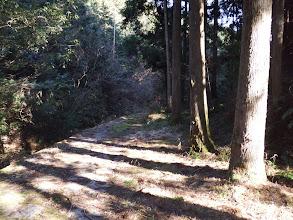 1.5kmほど林道歩き