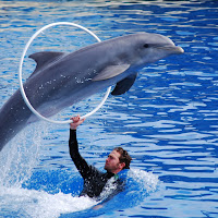 Delfini di