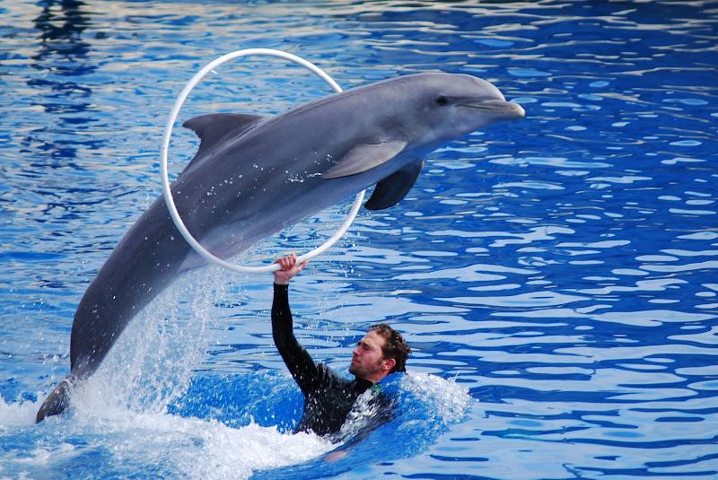 Delfini di Pavel73