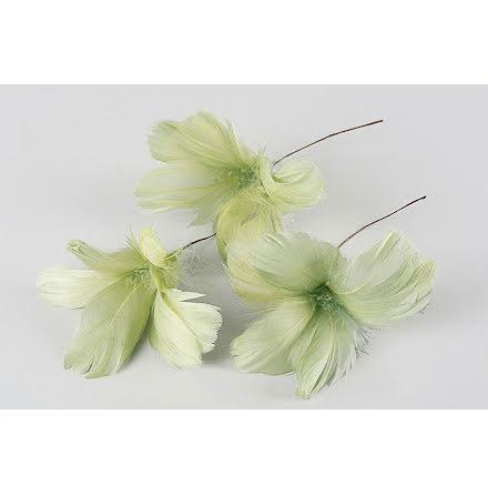 Fjädrar Blom Lime 12-pack