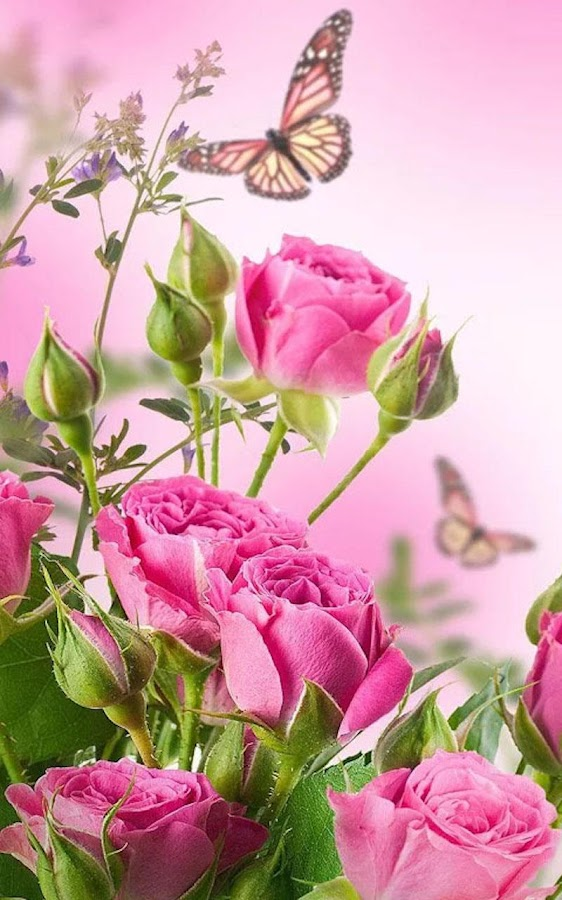 HD Rose Flowers Live Wallpaper Android Apps on Google Play