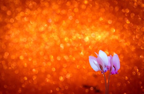 Orange bokeh di Norman_Bates
