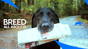 Portuguese Water Dog thumbnail