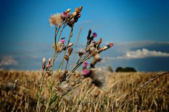 Photo: field flowers