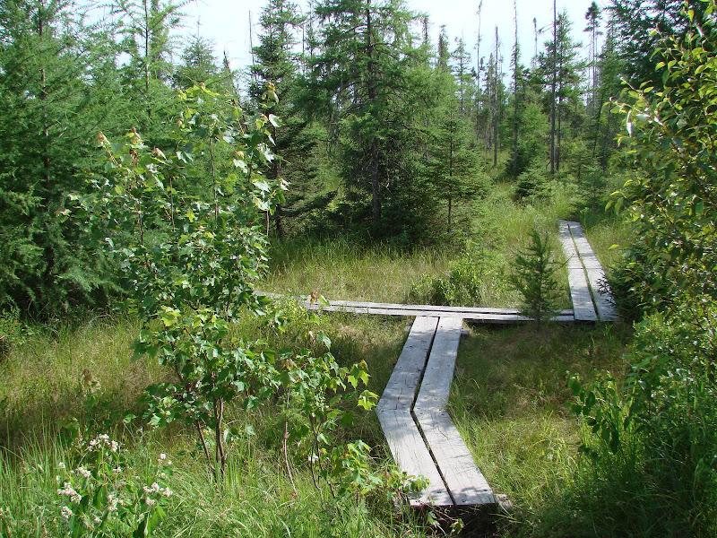 Photo: Bog trail at Lake Carmi State park by Sara Hayes
