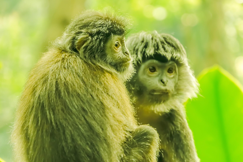 シンガポール動物園 モンキー3