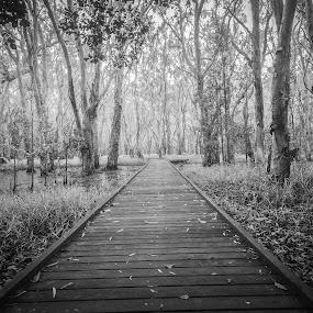 Boardwalk by Steve Hunt - Black & White Landscapes (  )
