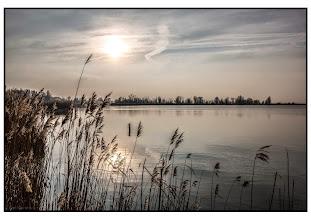 Photo: Nederland - Natuur - Oostvaardersplassen Foto: Bert Morsink