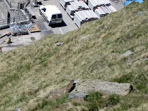 Photo: Murmeltiere wollen gefüttert werden