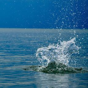 Blue Splash by Jay Hathaway - Landscapes Beaches ( splash, splash water photography, water, water drops )