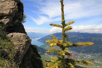 Photo: In the distance, lake Thun.
