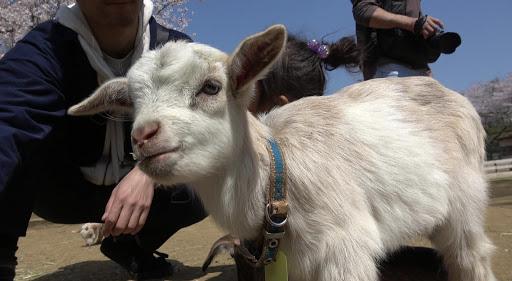 成田ゆめ牧場へ娘とおでかけ♪のメイン写真