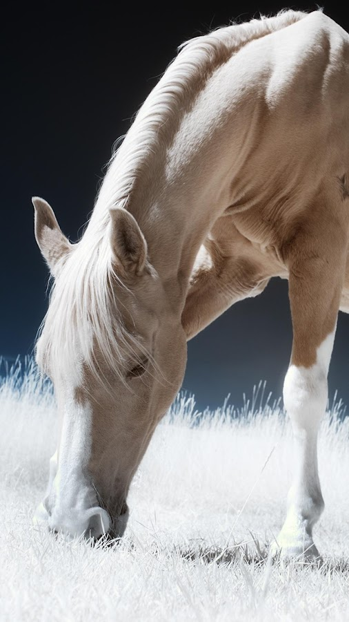 Horse Wallpapers- screenshot