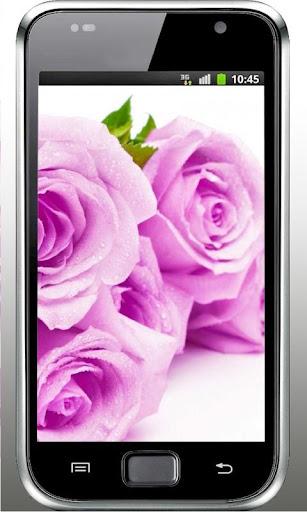 Purple Roses 2015 LWP