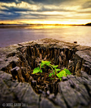 Photo: Good morning Googler's  This is another from my archives, I was out on the banks of the Mersey taking some sun set images and not having much success. I was about to head for home when I looked down at one of the old tie stumps for docking ships. The top had rotted away and inside a small plant had taken up residence.  I love the fact than when man abandons something nature comes back and reclaims what's hers, I think it was this photograph that taught me I need to look down at the smaller things instead of trying to go for the grand landscape all the time.