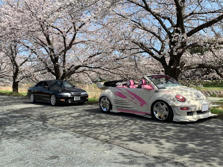 マークII JZX100のこだま千本桜,小川町,メデューサ号,桜とコラボ,SSS(saitama street stage)に関するカスタム&メンテナンスの投稿画像4枚目