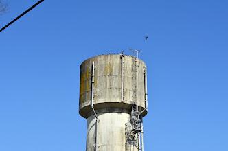 Photo: 給水塔の上に鳥が