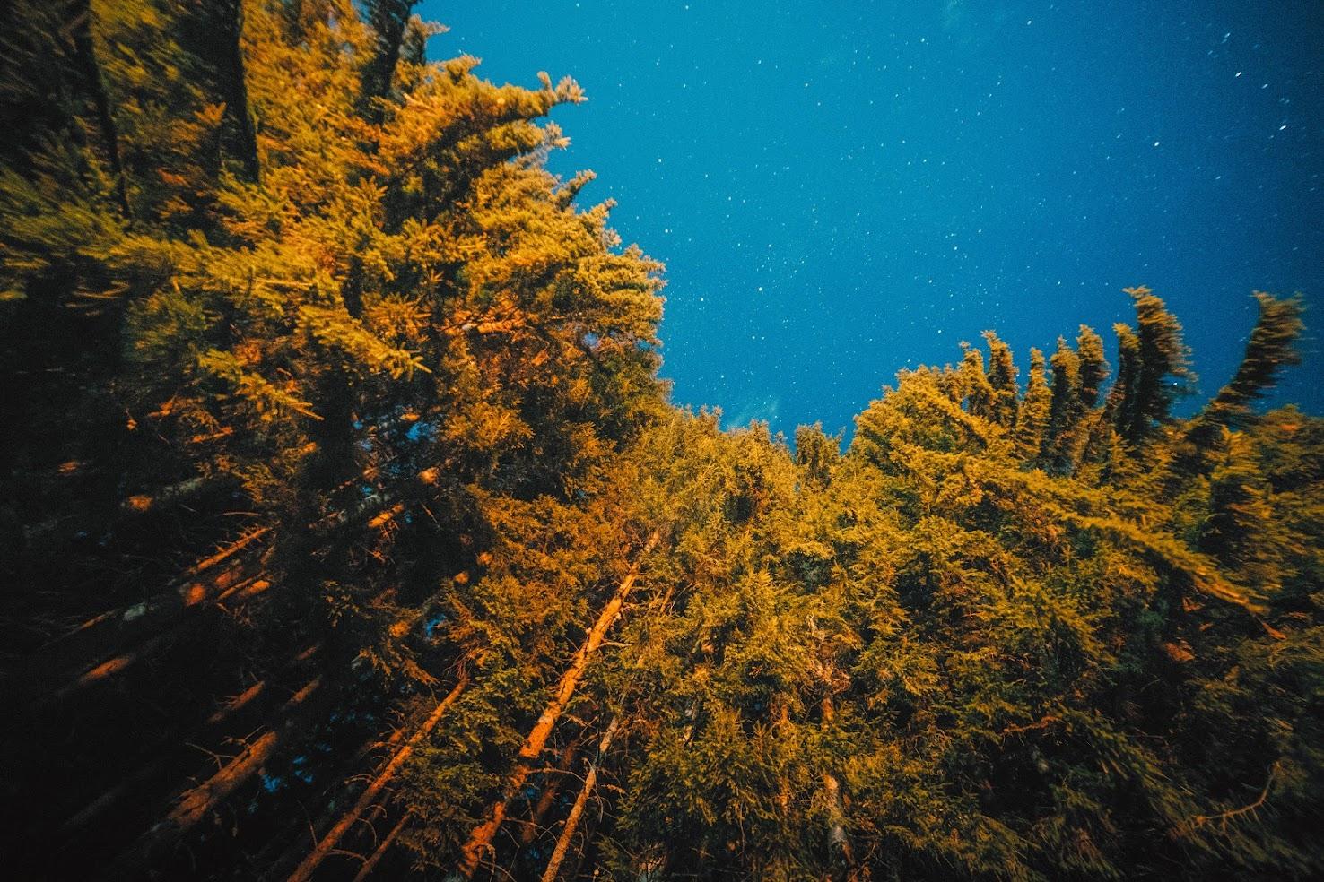 Ліс вночі