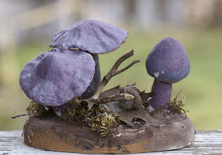 Photo: Entoloma mandidum sculpture by Dick Grimm. Photography by Alan McClelland.