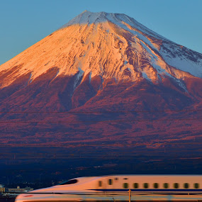 Majestic Fuji by Kamal Kamaludin - Landscapes Mountains & Hills ( fuji majestic peak mountain landscape japan snow mount travel asia japanese sky scenery nature white spring green blue tree fresh famous beautiful agriculture volcano traditional organic new harvest leaf farm )