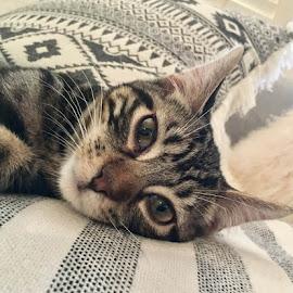 Sideways Chillin Kitty by Lori Fix - Animals - Cats Kittens