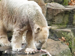 Photo: Knut probiert mal eben ;-)
