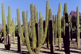 Photo: #005-Cactus