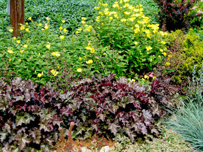 Photo: Heuchera and 4 O'clocks - two great plants that look great together!