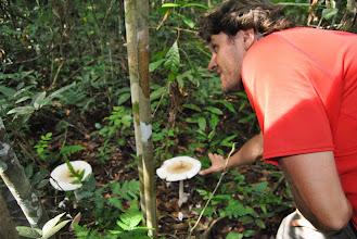 Photo: funghi sgabello