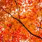 FallColors-3.jpg