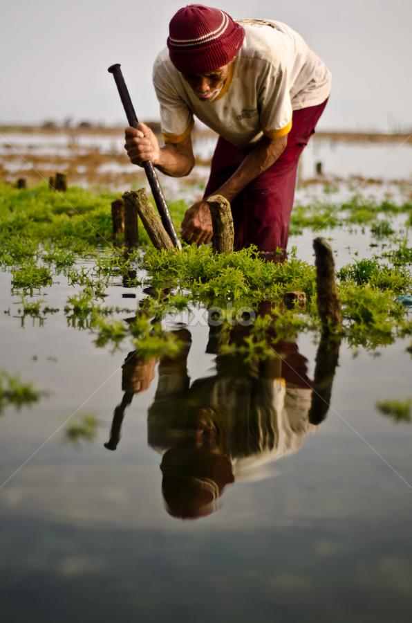 Seaweed Farmer by Wisnu Taranninggrat - News & Events World Events ( bali, farmer, seaweed, sea, morning )