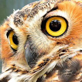 Big eyes by Ruth Overmyer - Animals Birds (  )