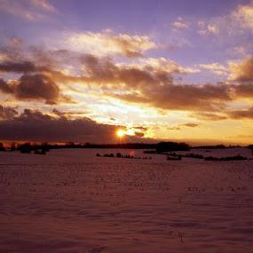 Snowy by Sarah Minnihan - Landscapes Prairies, Meadows & Fields ( field, sunset, snow )