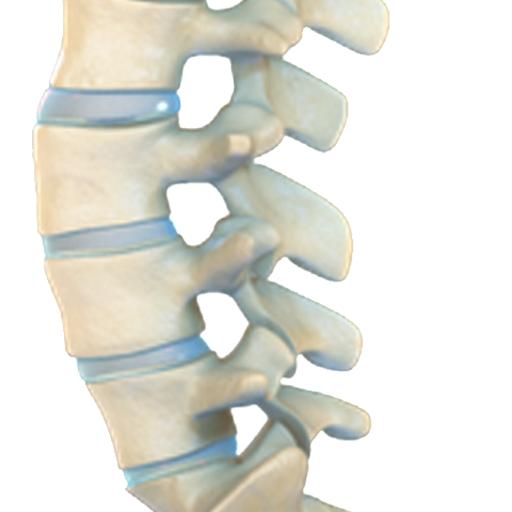 VR Human Spine