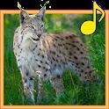 Forest Animals for Children icon