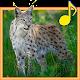 Forest Animals for Children (app)