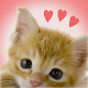 Download My Kittens For PC Windows and Mac