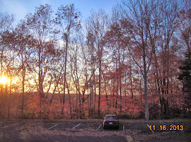 sunset makes this look more colorful than it really is - remaining leaves are mostly yellow-brown oak