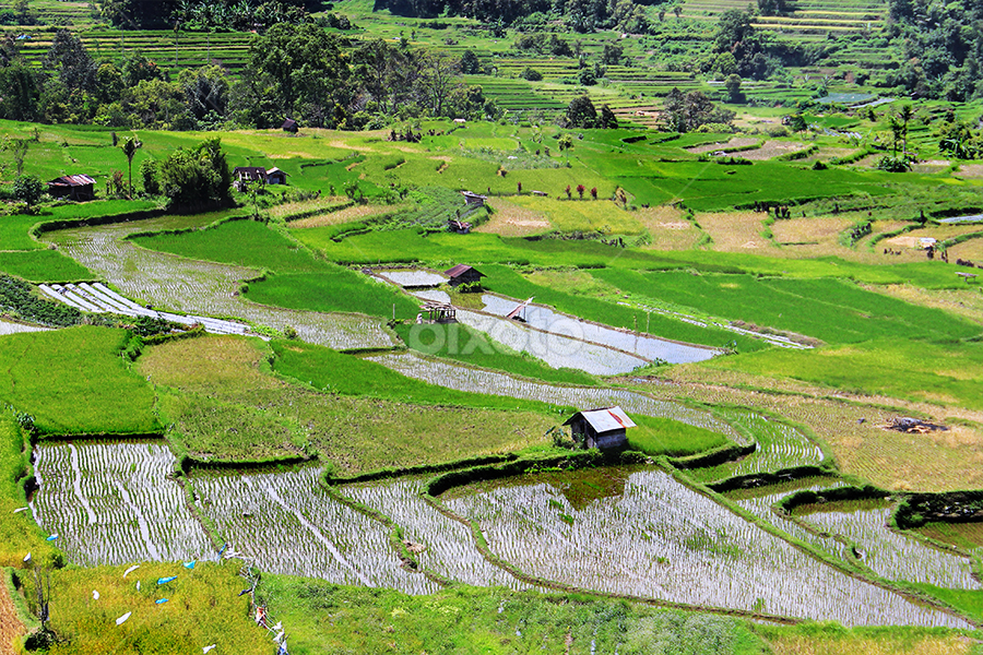 Field malalak by Budi Hermanto - Landscapes Prairies, Meadows & Fields